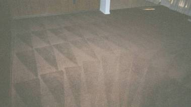 san antonio carpet cleaning in spring branch